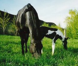 Elvira and Foal