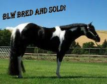BLW Bred and Sold